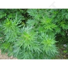 Essential artemisia oil, antihistaminic for itching and sweet itch